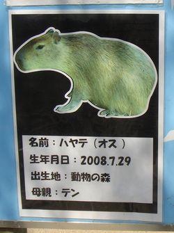 DSC02480.jpg