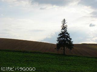DSC07758.jpg