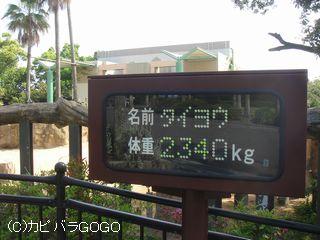 DSC08696.jpg