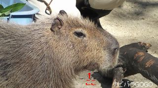2011-03-27_145953.jpg